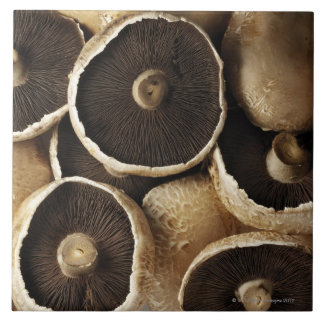 Portobello Mushrooms on White Background Large Square Tile