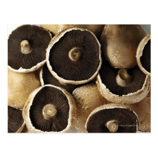 Portobello Mushrooms on White Background Postcard