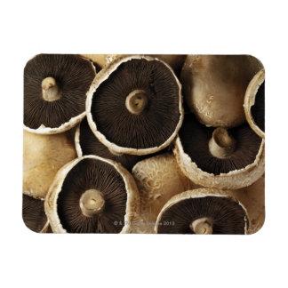 Portobello Mushrooms on White Background Magnets