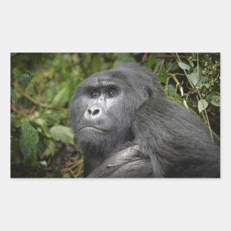 portraet of a silverback mountain gorilla stickers