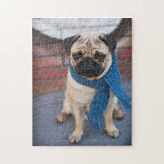 Portrait Cute Pug Dog with Blue Scarf, City Dog Jigsaw Puzzle