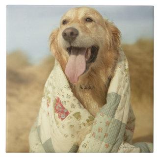 Portrait dog on beach under quilt. Fall Tile