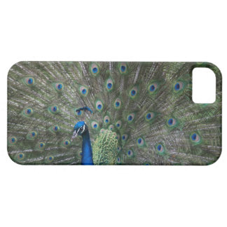 portrait, feathers, colorful, peacock, outdoors, case for the iPhone 5