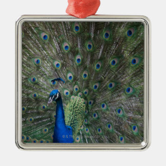 portrait, feathers, colorful, peacock, outdoors, christmas ornament