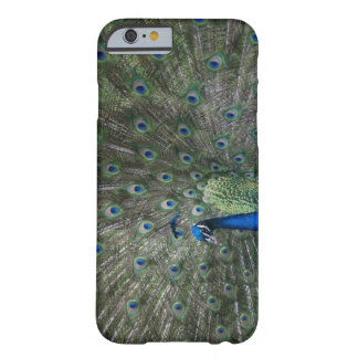 portrait, feathers, colourful, peacock, outdoors, barely there iPhone 6 case
