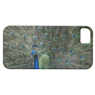 portrait, feathers, colourful, peacock, outdoors, iPhone 5 case