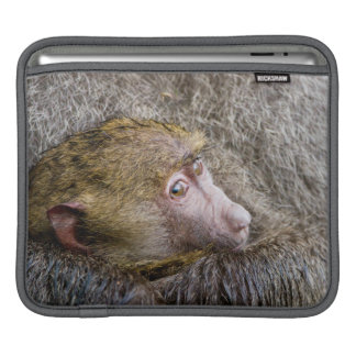 Portrait Of A Baby Olive Baboon (Papio Anubis) iPad Sleeve