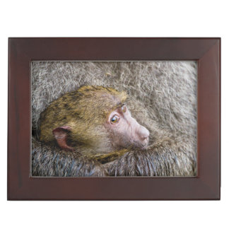 Portrait Of A Baby Olive Baboon (Papio Anubis) Keepsake Box