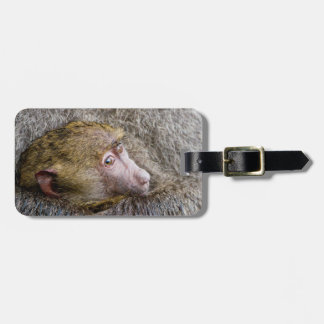 Portrait Of A Baby Olive Baboon (Papio Anubis) Luggage Tag