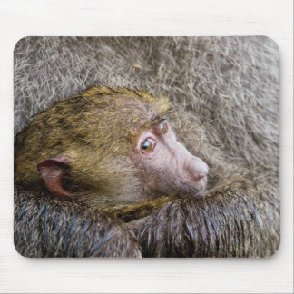 Portrait Of A Baby Olive Baboon (Papio Anubis) Mouse Pad