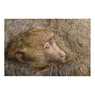 Portrait Of A Baby Olive Baboon (Papio Anubis) Wood Wall Decor