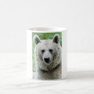 Portrait of a bear mugs