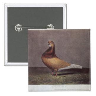 Portrait of a Beard Pigeon 15 Cm Square Badge