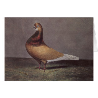 Portrait of a Beard Pigeon Card