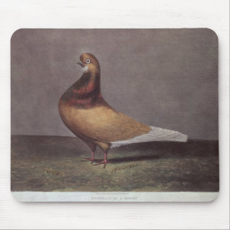 Portrait of a Beard Pigeon Mouse Pad