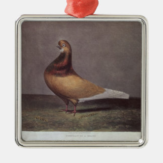 Portrait of a Beard Pigeon Silver-Colored Square Decoration