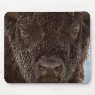 Portrait Of A Bison Bull In The Rain Mouse Mat