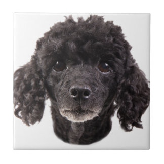 Portrait of a black poodle small square tile