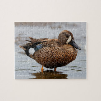 Portrait of a Blue-Winged Teal Jigsaw Puzzle