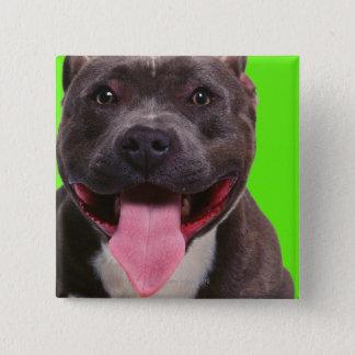 portrait of a bulldog 15 cm square badge