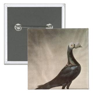 Portrait of a Carrier Pigeon 15 Cm Square Badge