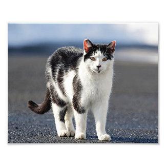 Portrait of a cat art photo