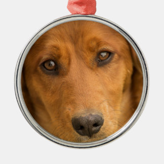 Portrait of a Dachschund puppy Silver-Colored Round Decoration