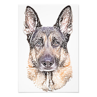 Portrait of a Dog German Shepherd Colored Sketch Photograph
