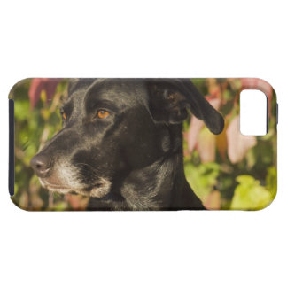 Portrait Of A Dog iPhone 5 Cover