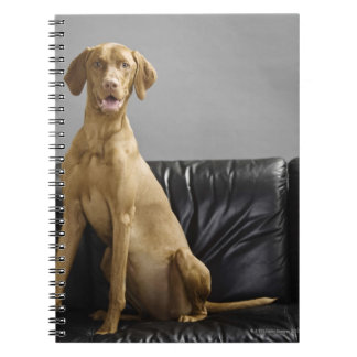 Portrait of a dog notebooks