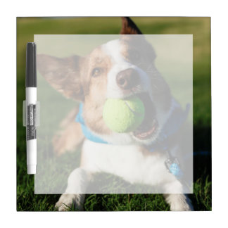 Portrait of a dog, Phoenix, Arizona Dry Erase Board