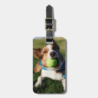 Portrait of a dog, Phoenix, Arizona Luggage Tag