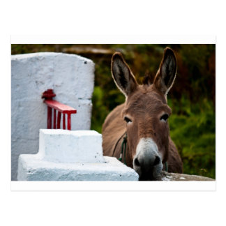 Portrait of a Donkey in Ireland Postcard