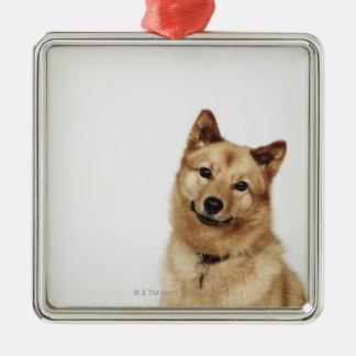 Portrait of a Finnish Spitz dog smiling Christmas Ornament