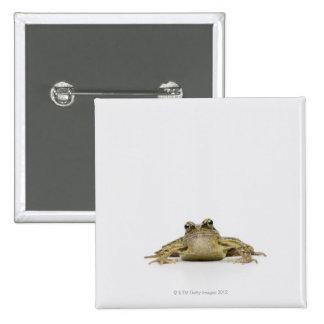 Portrait of a frog in a white studio 15 cm square badge
