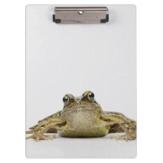 Portrait of a frog in a white studio clipboard
