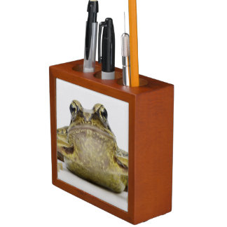 Portrait of a frog in a white studio desk organiser