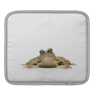 Portrait of a frog in a white studio iPad sleeve