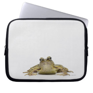 Portrait of a frog in a white studio laptop sleeve