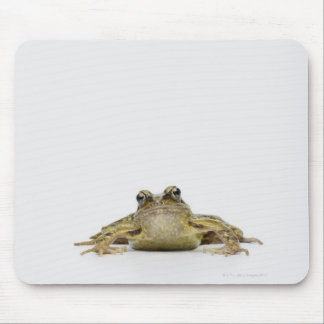 Portrait of a frog in a white studio mouse mat
