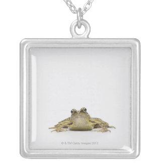 Portrait of a frog in a white studio pendant