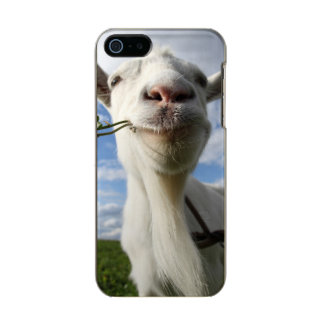 Portrait Of A Goat Eating A Grass On A Green Incipio Feather® Shine iPhone 5 Case