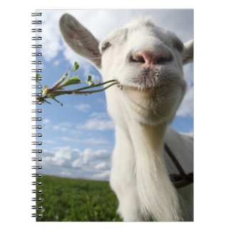 Portrait Of A Goat Eating A Grass On A Green Spiral Notebook