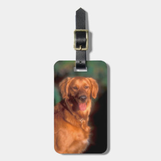 Portrait of a golden retriever bag tag