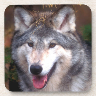 Portrait of a gray wolf drink coasters