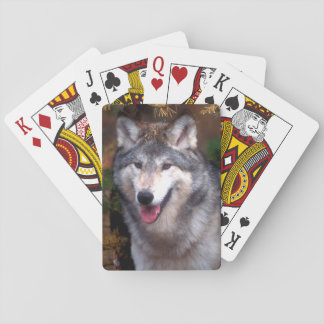 Portrait of a gray wolf playing cards