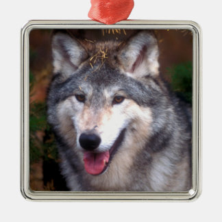 Portrait of a gray wolf Silver-Colored square decoration