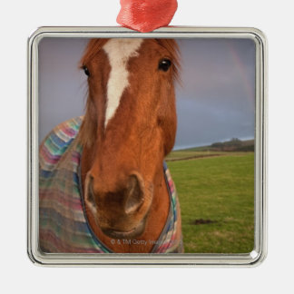 Portrait Of A Horse With A Rainbow In The Sky Christmas Ornament