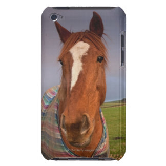 Portrait Of A Horse With A Rainbow In The Sky iPod Touch Cases