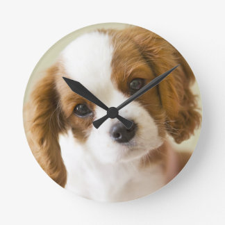 Portrait of a King Charles Spaniel puppy Round Clock